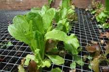 hilary salad